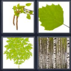 4 fotos 1 palabra 6 letras troncos hojas verdes