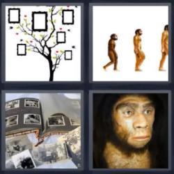 4 fotos 1 palabra 8 letras árbol genealógico