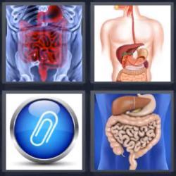 4 fotos 1 palabra 8 letras aparato digestivo