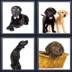 4 fotos 1 palabra 8 letras perro en una cesta cachorros