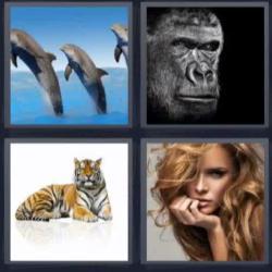 4 fotos 1 palabra 8 letras delfines gorila mujer tigre