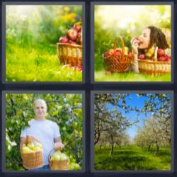4 fotos 1 palabra 8 letras cesta con manzanas campo