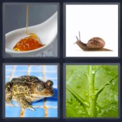 4 fotos 1 palabra 8 letras caracol sapo hoja miel