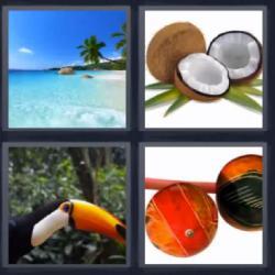 Respuesta 4 fotos 1 palabra 8 letras playa, cocos, pájaro tucán, pelota