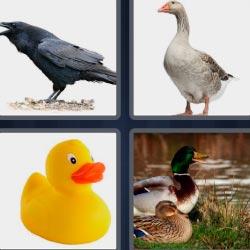 4 fotos 1 palabra 8 letras cuervo, oca, patito de goma amarillo, patos junto a un río